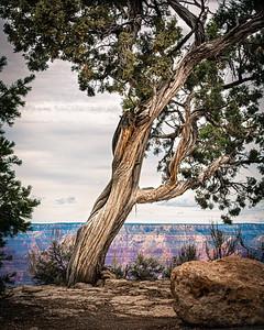 Grand Canyon 2020-7