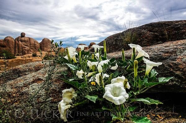 Granite Dell Flowers
