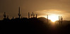 Arizona sunrise and saguaro silhouettes