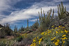 Organ Pipe And Wildflowers