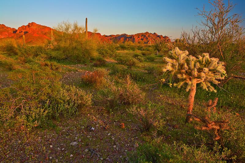 Arizona, Organ Pipe Cactus National Monument, Sunset Landscape, 亚利桑那 沙漠, 风景