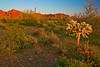 Arizona, Organ Pipe Cactus National Monument, Sunset Landscape, 亚利桑那 沙漠, 风景