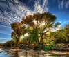 Late in the day along the Hassayampa River