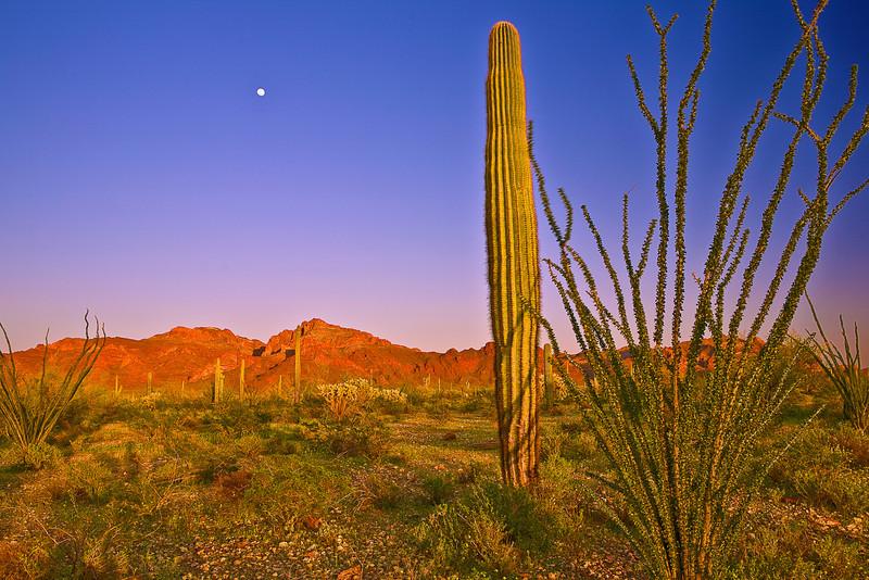 Arizona, Organ Pipe Cactus National Monument, Sunset Landscape,亚利桑那, 巨仙人掌谷国家遗迹 沙漠, 风景