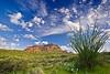 Arizona, Boyce Thompson Arboretum State Park, Landscape, 亚利桑那 沙漠, 风景