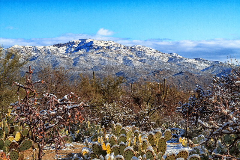 Snow on Rincon Mountains