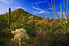 Arizona, Saguaro National Park, Sunrise Landscape, 亚利桑那,  仙人掌国家公园 沙漠, 风景