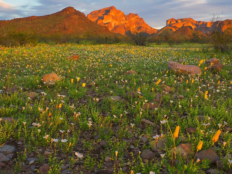 Saddle Mountain, Tonopah, AZ
