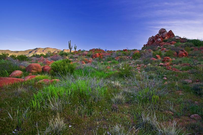 Arizona, Mazatzal Wilderness, Sunrise Landscape, 亚利桑那 沙漠, 风景