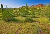 Arizona, Organ Pipe Cactus National Monument, Landscape,亚利桑那, 巨仙人掌谷国家遗迹 沙漠, 风景
