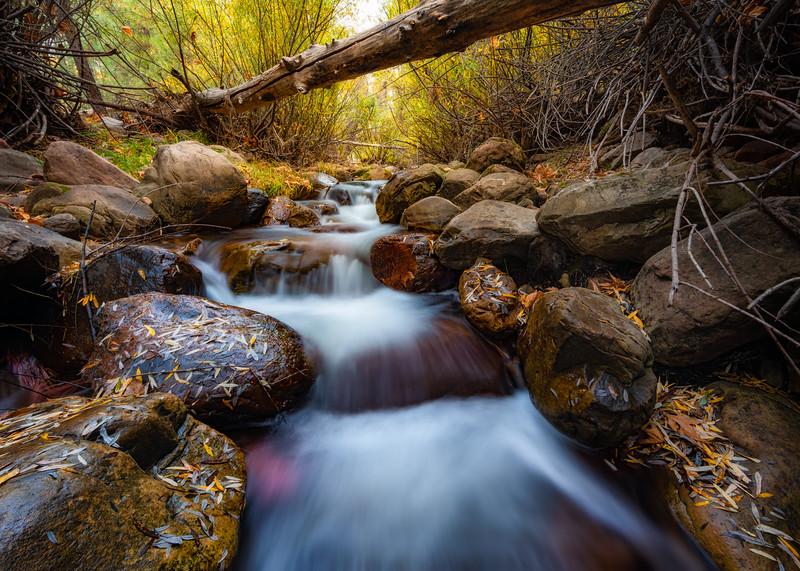 Creek under a Tree