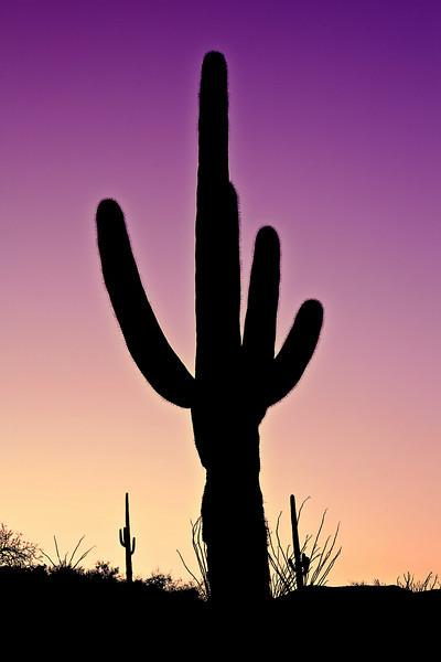 Arizona, Organ Pipe Cactus National Monument, Sunset Landscape, 亚利桑那, 巨仙人掌谷国家遗迹 沙漠, 风景