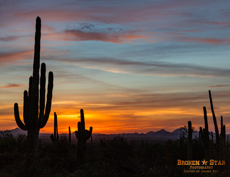 Saguaro Sunset @ Saguaro National Monument, Tucson, AZ