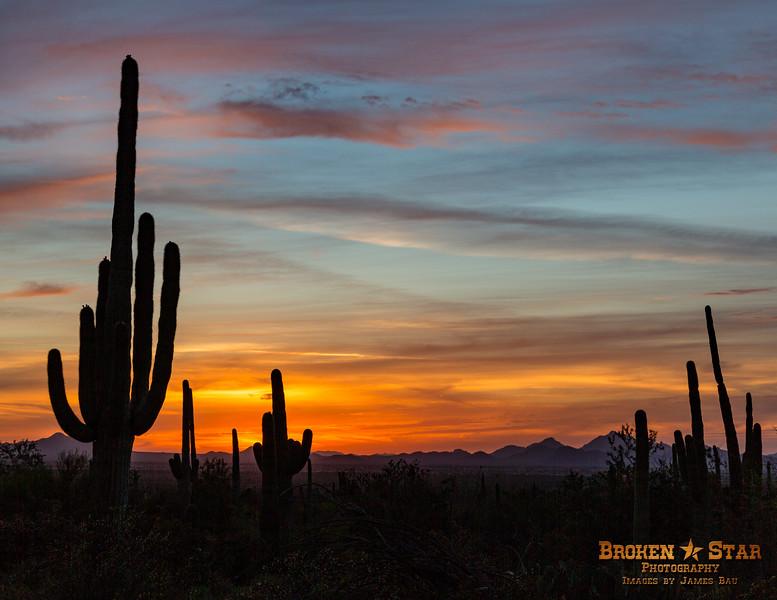 Saguaro Sunset @ Saguaro National Monument, Tucson, AZ