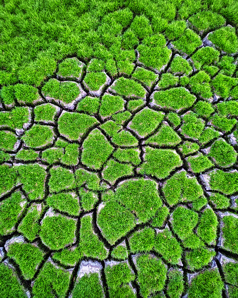 Cracked Grass