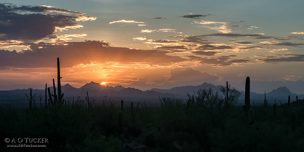 Painted Sunset From Saguaro National Park