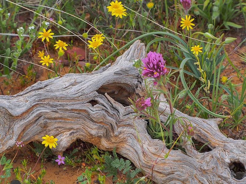 Flower self-arrangement