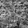 Arizona 248
