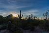 Tucson Mountain Park Sun Rays