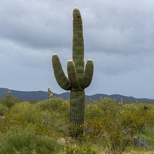 Arizona 2020