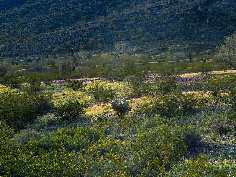Eagletale Mnt Wilderness Area, AZ