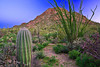 Arizona, Saguaro National Park, Sunrise Landscape,亚利桑那,  仙人掌国家公园 沙漠, 风景