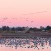 Sunrise at Cibola National Wildlife Refuge