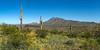 Tres Saguaros Picacho Peak
