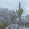 Snow in Tucson