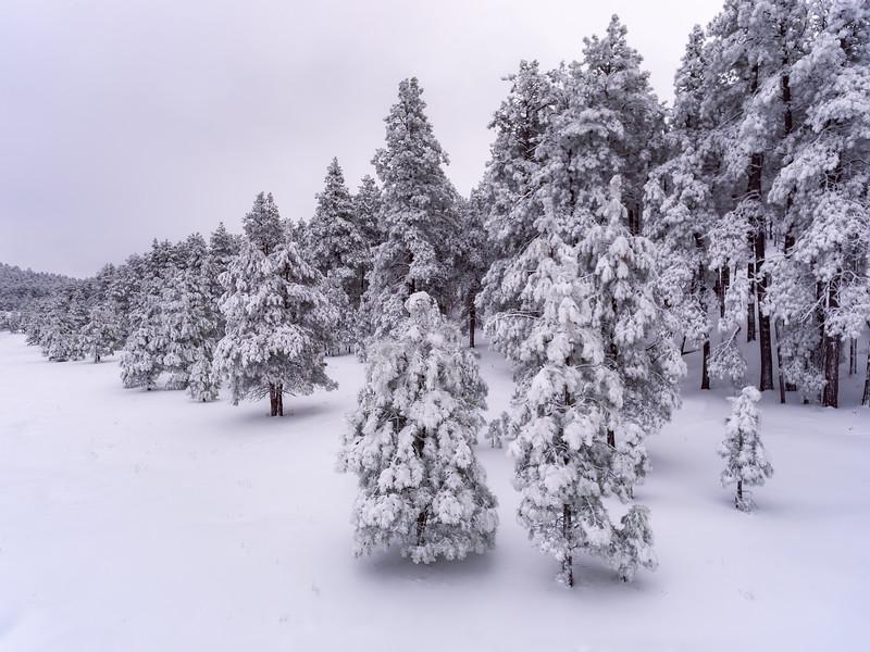 Mingus Snow III