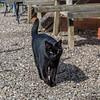 The local cat at Arley!