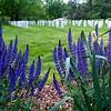 Arlington National Cemetery 1
