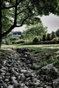 20120901. Arnold Arboretum, Boston MA. View towards Dana Greenhouses from edge of Leventritt Shrub and Vine Garden