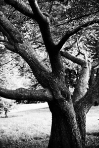 20120903.  Arnold Arboretum, Boston MA.