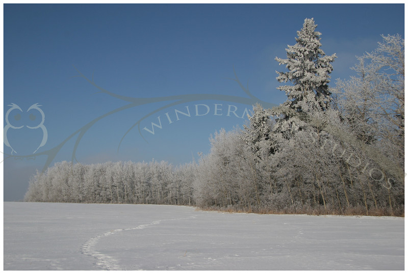 Heavy hoar frost and bright blue skies, another typical Alberta scene.