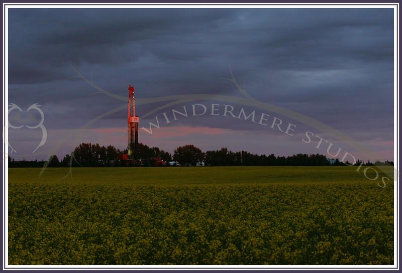 Canola field at dusk. Typical Alberta rural scene.