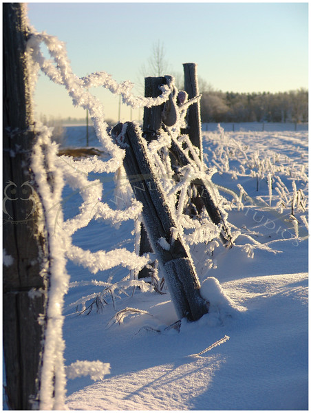 Hoarfrost covered barb wire fence