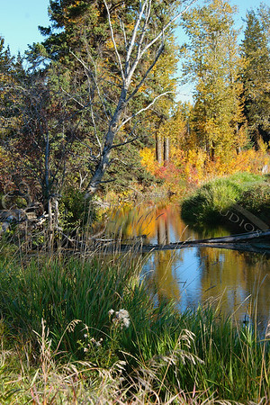 Whitemud Creek, Fall 2005