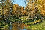Whitemud Creek, Fall 2005 Whitemud Creek, Fall 2005
