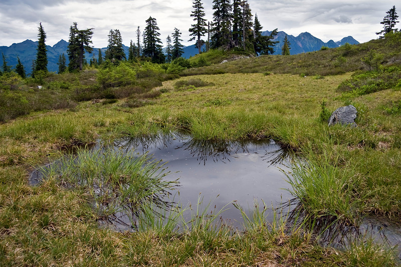 late spring in the mountains <br /> rivulets and ponds from snowmelt