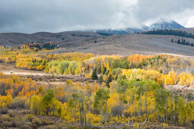 Aspen Groves, Conway Summit