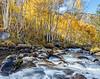 Bishop Creek, Sierras