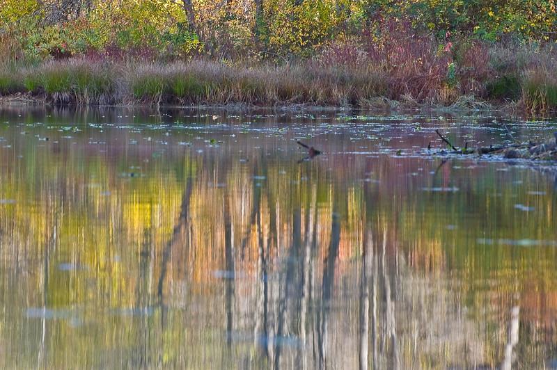 Fall Watercolor, Lower Scotts Flat Lake, Nevada County