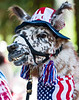 July 4th llama, Nevada City