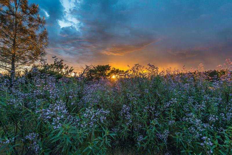 Grass Valley Sunset