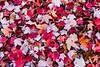 Fall Confetti