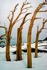 Four Snags in Winter, Sierra Nevada range
