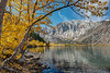 Convict Lake fall aspens