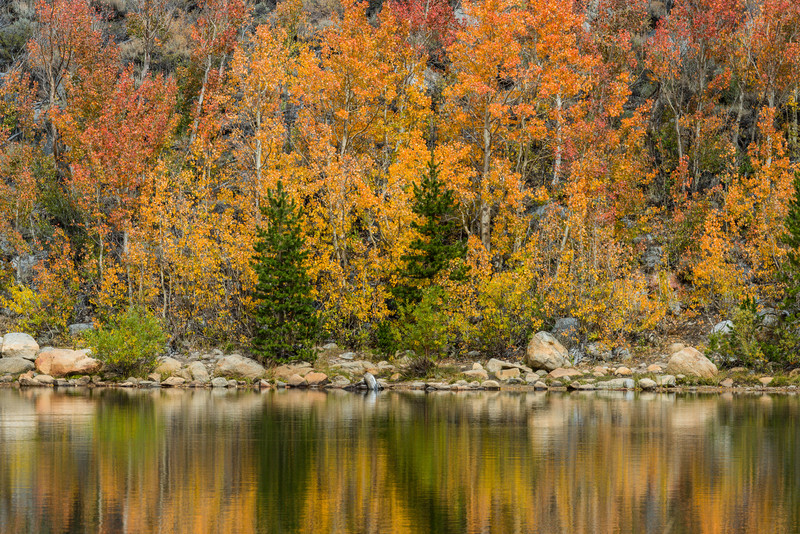 North Lake Fall Aspens