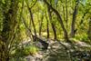 Convict Lake boarkwalk trail